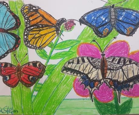 Schmetterlinge- die Boten des Frühlings